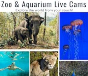 Animal Live Cam header